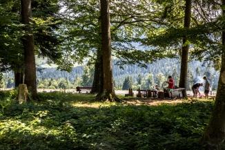 Erste Grillstelle gleich am Waldrand