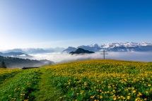 Blumenwiese bei Hinterbergen